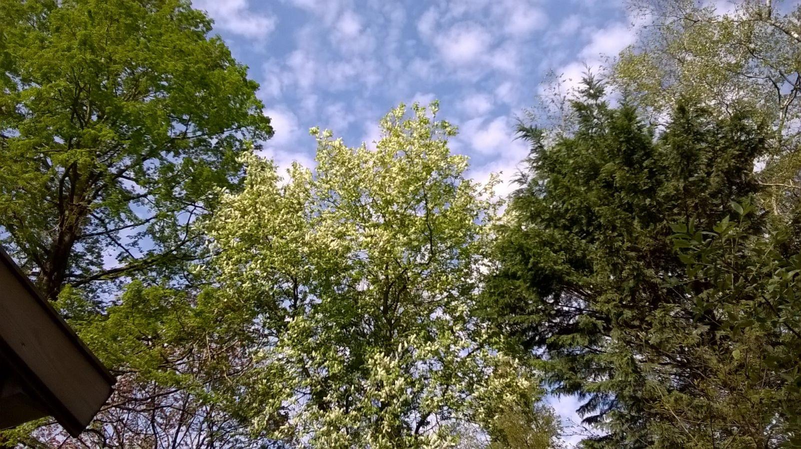 Tuinbomen die hemel en aarde gezond houden